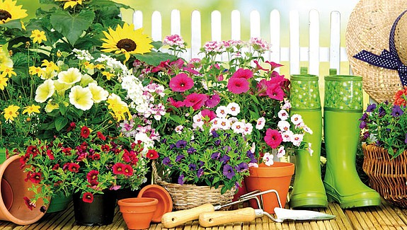Concours des balcons et jardins fleuris - Ville de Colombes