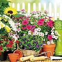 Consulter l'article : Concours des balcons et jardins fleuris
