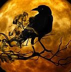 Voir l'evenement : La nuit de l'horreur
